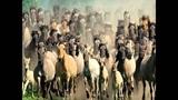 Wild Horses - Karen Souza