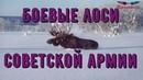 Боевые лоси Советской Армии_(Тайны истории)_Alexandrite_(рус.суб.) (РЖЯ)