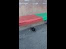 Голубь с перебитым крылом возле подъезда Покормили Участь его скорее всего печальная Кругом ходят бездомные коты Позже на