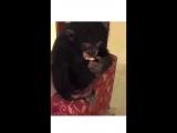 Who let this monkey take a dab_