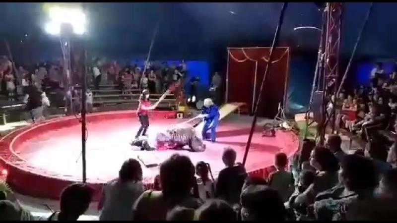Медведь напал надрессировщика вовремя представления Медведя стали забивать палками все.