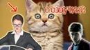 Приколы с котами и смешная ОЗВУЧКА – ЛУНТИК и ГАРРИ ПОТТЕР Приколы 2018 от PSO