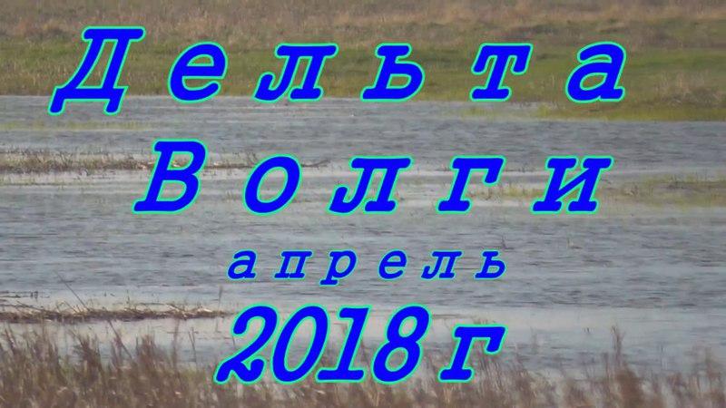 Нахлыст, щука , Дельта Волги апрель 2018г