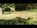 Вадим Черновецкий. -- Жираф -- самое высокое животное во Вселенной :-)
