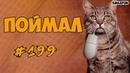 Приколы с Котами - Смешные коты и кошки 2018 - Funny Cats