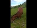 Если конь не хочет работать на корде он встает на колени и просит о пощаде😂😂😂