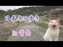 Japan's Cat Island 日本ネコ歩き in 「青島」 Aoshima Island