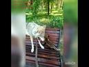 ЛисаГела и ВолкВоланд на лавочке в парке Гагарина