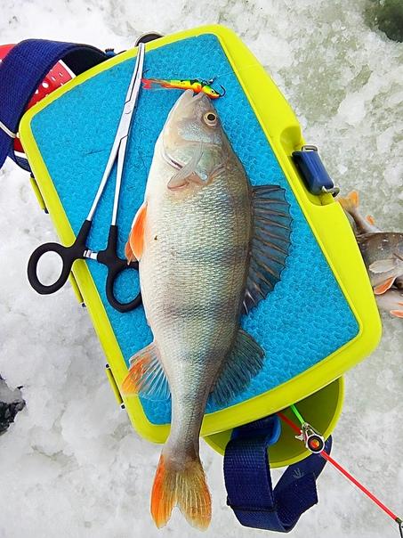 как и в прошлую среду, когда просто улётно порыбачил сегодня опять на пару часиков махнул на рыбалку :) погода тёплая, ветра можно сказать что нет. давление ровное. всё что нужно для хорошей