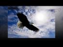 Орёл в Курятнике