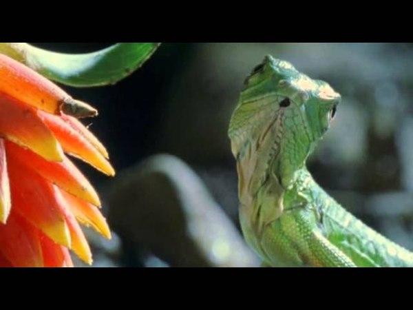 Ребятам о Зверятах - Зеленая Игуана (2 Сезон 4 Серия от ASHPIDYTU в 2006)