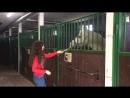 Инна кормит лошадку