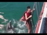 Дельфин насилует девушка...