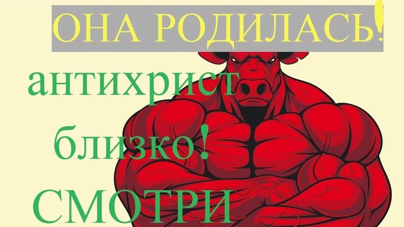 родилась рыжая телица апокалипсиса антихрист близко СМОТРИ