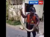 Змея поселилась в стене жилого дома
