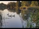 Лебедь запутался в рыболовной снасти