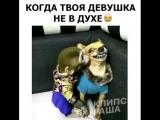 [Kavkaz vine] Когда девушка не в духе