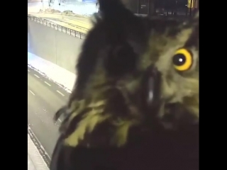 This is the owl of luck, you don't need to like the video, but watch it with sound on