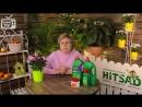 Сорта барбариса 🌟 Топ самых ярких кустарников - видео обзор HitsadTV