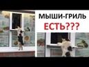 Лютые приколы Кот покупает шаурму и ПЛОСКАЯ ЗЕМЛЯ