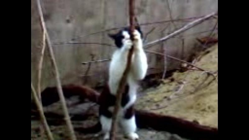 Котик стриптизёр