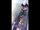 Рыбалка на пиранью...