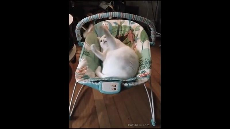 Котик любит играть с игрушками 😍