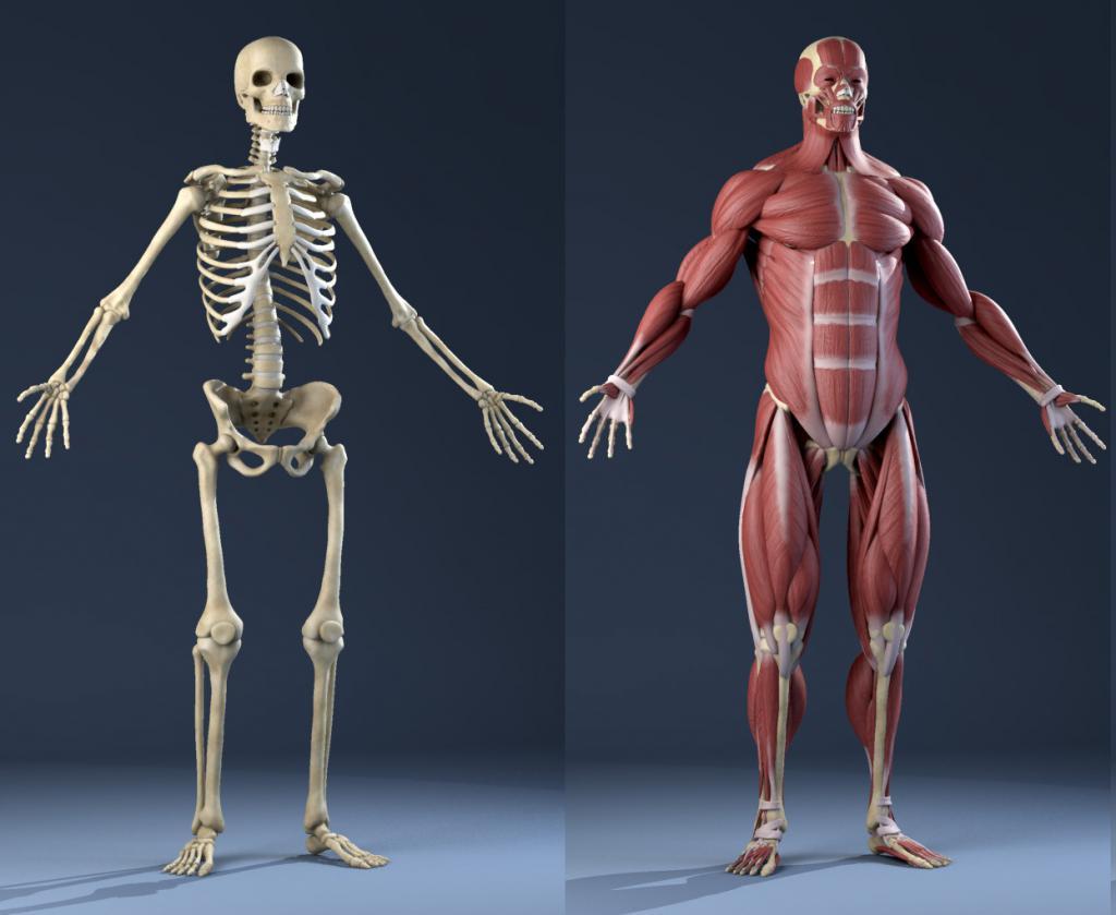 Анатомия как наука и ее методы