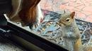 Eichhörnchen tippt jeden Tag ans Fenster 8 Jahre später erkennt die Familie was es zeigen wollte