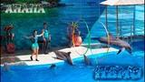 Дельфинарий Немо (Анапа 2018) - шоу с дельфинами, морскими котиками, белугой и моржом Нюшей