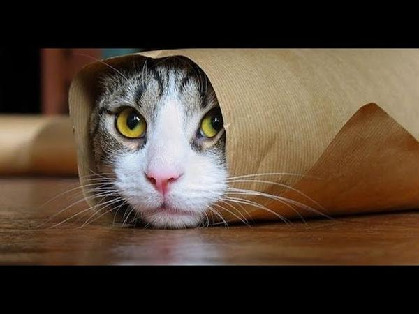 Kedilere Alerji Nasıl Geçer