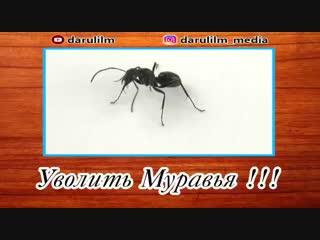 Судьба муравья