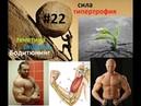Виды силы Гольджи Сухожилия Гипертрофия Длинные и короткие брюшки мышц Бодитюнинг 22