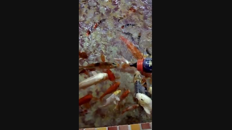 Рыбки кушают из бутылочки 3