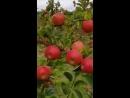 прогулка а яблоневом саду 3D