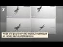 Учёные научили паучиху прыгать и засняли это