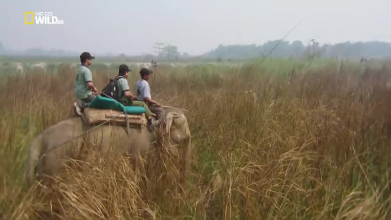 Nat Geo Wild_ На защите носорогов (1080р)