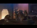 Schneider Electric Raccoon Dance Party