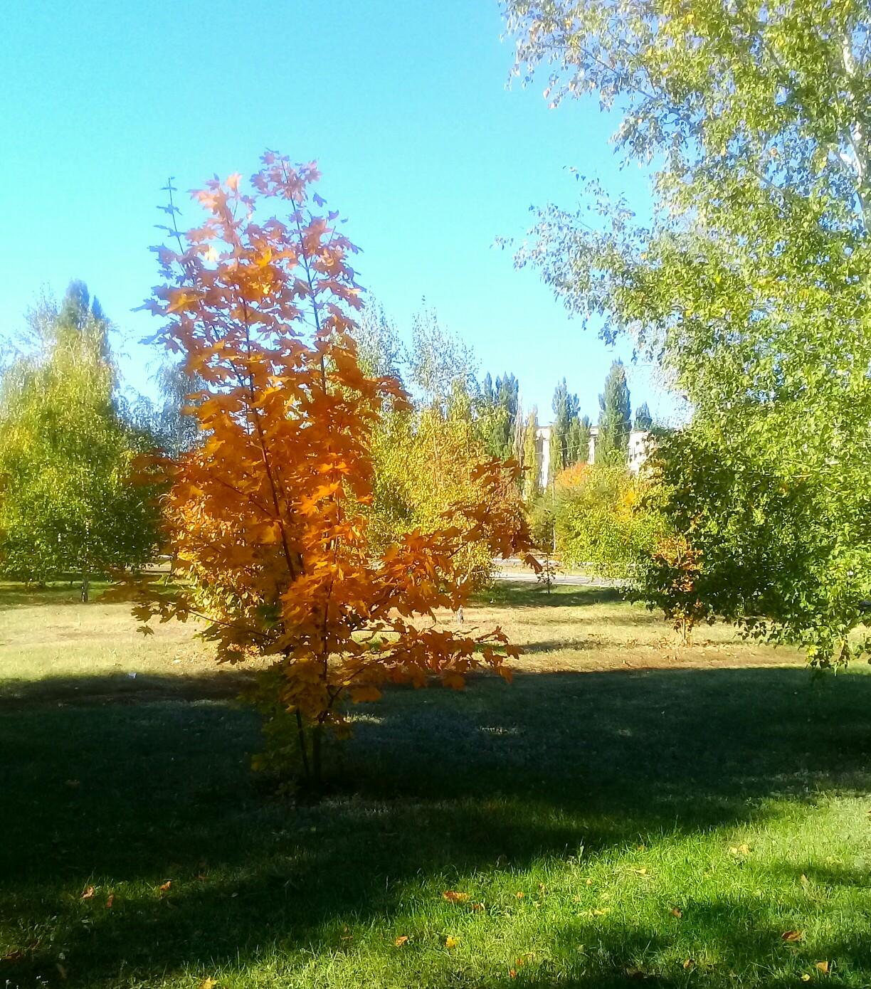Осень в Кировске!