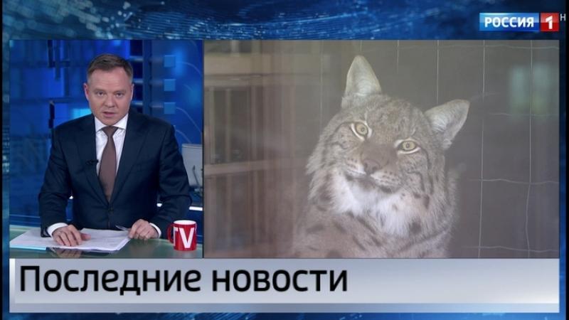 Проект закона, запрещающий содержать дома диких животных, внесен в Госдуму