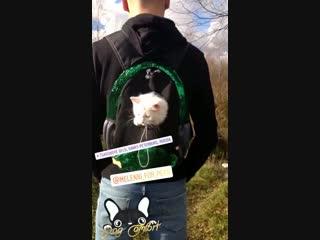 Видеоотзыв-видеообзор на рюкзак-переноску от бренда DOG COMFORT