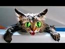 РЖАЛ ВЕСЬ ДЕНЬ (смешные коты и смешные кошки)