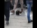 Уровень пофигизма кот 😂