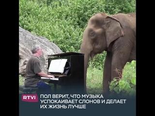 Музыка для бедных слоников