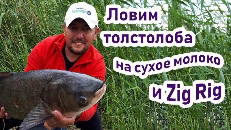 Поймал крупного толстолоба на сухое молоко и Zig Rig! Рыбалка на крупного толстолоба и белого амура!