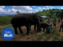 Baby elephant knocks over tourists attempting to take selfie