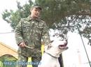 В колонии служебных собак тренируют ежедневно