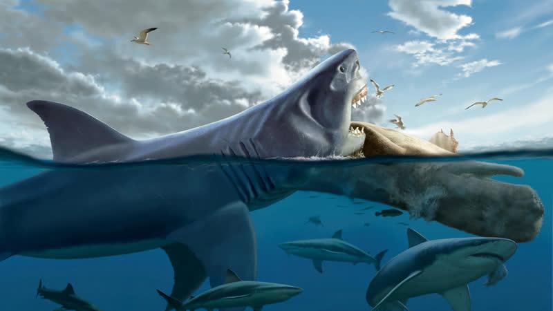 Доисторические хищники — Мегалодон