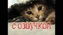 Приколы с котами с озвучкой от Domi Show - Смешные коты и кошки 2018