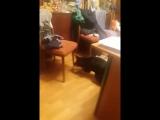 Евгения Финк - Live